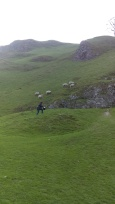Marie chasing sheep.